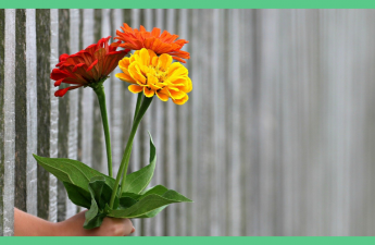 Somebody handing flowers through some railings. The image has a green border.