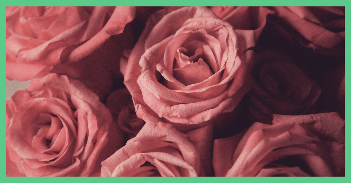 The image is of some dusty pink roses. The image is being used to illustrate cheap Valentine's Day ideas. The image has a green border.