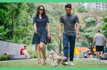 Image shows a couple walking a dog. The picture has a green border.