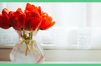 The image shows some flowers in a vase. The picture has a green border.